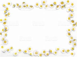Daisy Border stock photo 173812580 | iStock