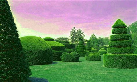 The Art Of Living Plant (topiary