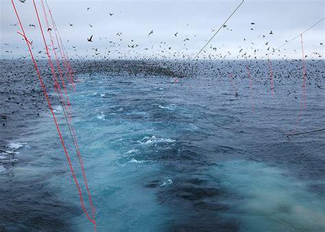 seabird bycatch longlines washington sea grant