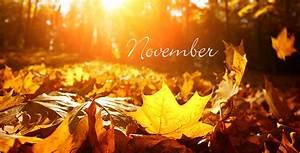Blumen Im November : aldi s d gartenkalender november ~ Lizthompson.info Haus und Dekorationen