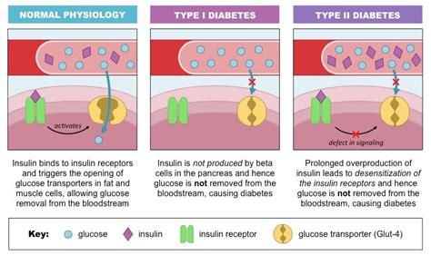 insulin  glucagon bioninja