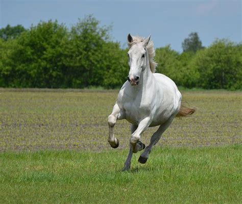 running horse fast grass meadow amazing rx