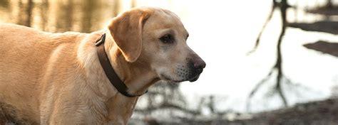Palīdzi sunim dzīvot veselīgi | PURINA®