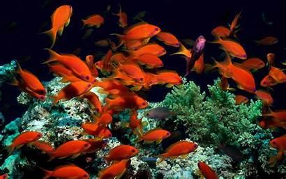 Fish Ocean Wallpapers Desktop Orange Coral Animal