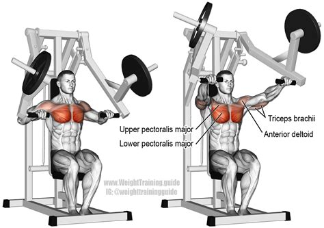 seated barbell shoulder press muscles worked awesome home