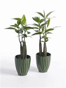 Plante D Intérieur Haute : plante originale interieur ~ Dode.kayakingforconservation.com Idées de Décoration