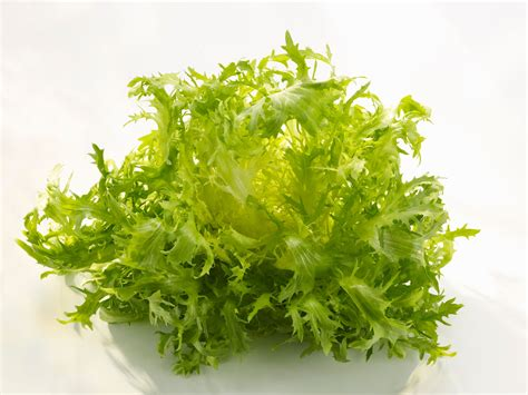 interior design for small spaces living room and kitchen what is frisée the great chicory endive escarole mystery