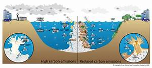 Acidification  Effect On Reefs