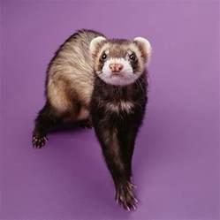 bathroom staging ideas litter box a ferret