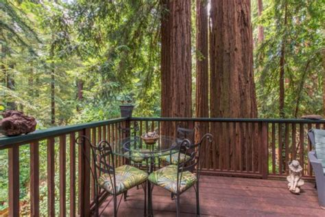 Tiny Cabin Surrounded by Giant Redwood Trees!