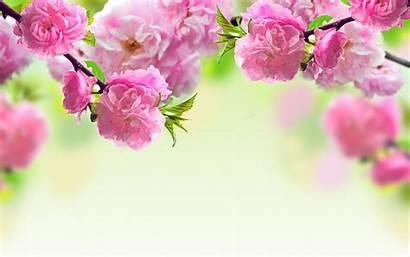Floral Background Desktop Ipad Wallpapers Laptop Wallpapertag