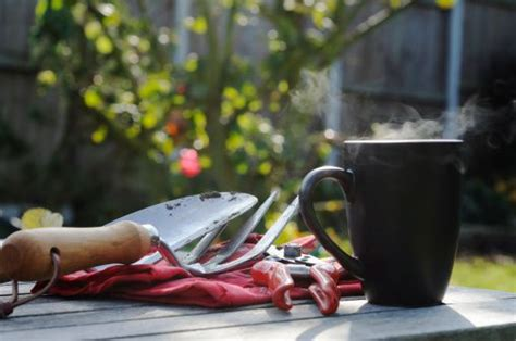 Garden coffee ⭐ , russia, tyumen, ulitsa respubliki, 65: Coffee Grounds in the Garden