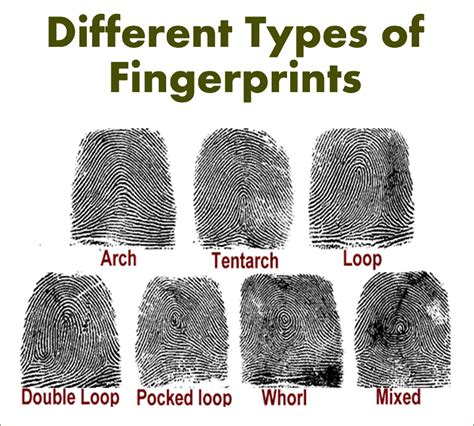 Different Kinds Of by Fingerprinting Employee And Tenant Background Screening