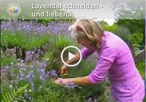 Wann Schneidet Man Rosen : 1000 images about anja maubach d wuppertal on ~ Lizthompson.info Haus und Dekorationen