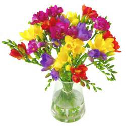 flower arrangement the secret meaning of flowers part 3 freesia clare