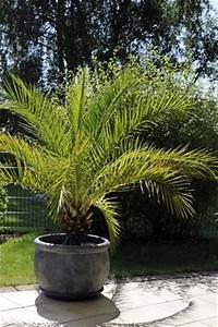 überwintern Von Palmen : rosen berwintern ~ Michelbontemps.com Haus und Dekorationen