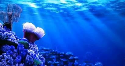 Nemo Gifs Finding Loop Sea Animated Deep