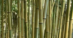 Bambus Im Garten : bambus multitalent mit macken mein sch ner garten ~ Markanthonyermac.com Haus und Dekorationen
