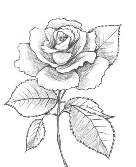 rose zeichnungen wie eine rose zeichnung fabrik zu