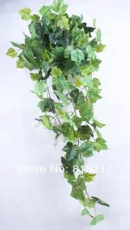 Indoor Ivy Plants