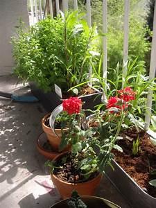 Welche Pflanzen Für Balkon : balkon und terrasse als bienenweide und lebensraum f r ~ Michelbontemps.com Haus und Dekorationen