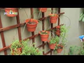 kreasi indah tanaman pot dinding youtube