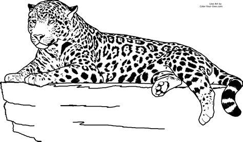 Realistic Jaguar Animal Coloring Pages Pinterest