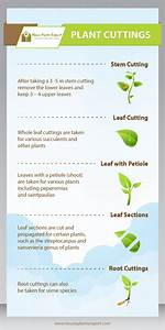 Propagating House Plants