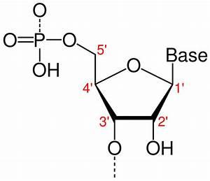 Directionality  Molecular Biology
