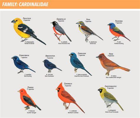kinds  birds  names