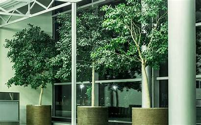 Indoor Trees Plants Plant Workplace Service Inside