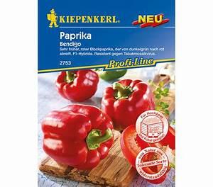 Paprika Pflanzen Pflege : kiepenkerl samen paprika 39 bendigo 39 dehner garten center ~ Markanthonyermac.com Haus und Dekorationen