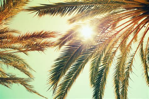 Palm trees and shining sun over bright sky   Custom Wallpaper