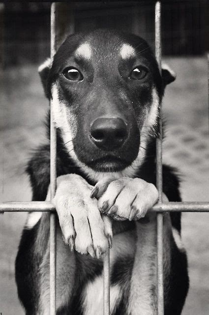 images  animal rescue animal rights