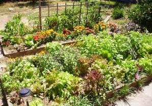Zinnias Vegetable Garden