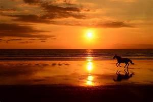 horse on beach Costa Rica by Jacob van der Veen