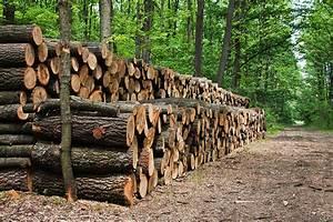 Feuchtes Holz Erkennen : holz hase magazin ~ Whattoseeinmadrid.com Haus und Dekorationen