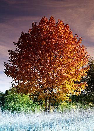 regenbogen baum regenbogenbaum rainbow tree digital