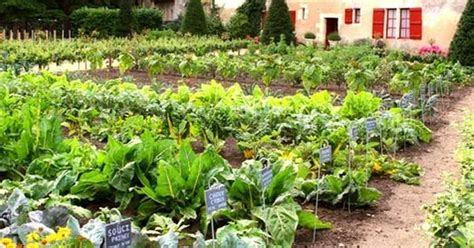 Home Vegetable Garden Ideas & Types On A Budget