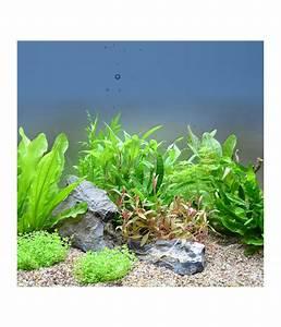Pflanzen Für Aquarium : planet plants asien 120er set aquarium pflanzen dehner ~ Buech-reservation.com Haus und Dekorationen