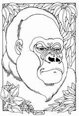 Coloring Colouring Gorilla Dandi Animal Adults Adult Sheets Browne Anthony Palmer Printable Shape Animals Mandala sketch template
