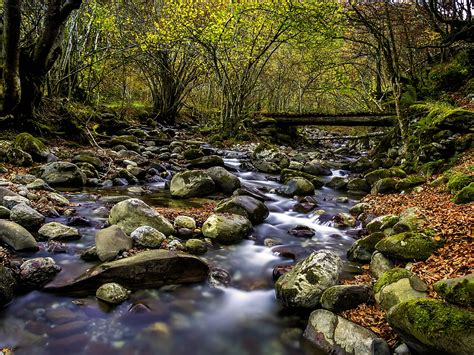 clear forest stream stones  green moss red leaves