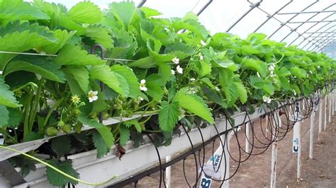 Hydroponic Indoor Gardening Quick Guide For Growers