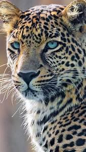Sch, U00f6ner, Kopf, Eines, Leoparden