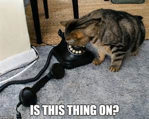 i was on the phone cat phone cat memes