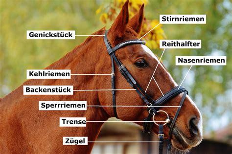 zaumzeug fuer pferde informationen ueber reithalfter und