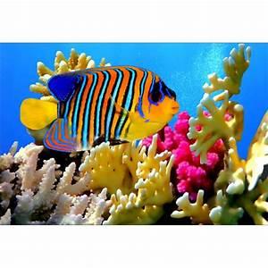 Deco Multicolore : stickers muraux d co poisson multicolore art d co stickers ~ Nature-et-papiers.com Idées de Décoration