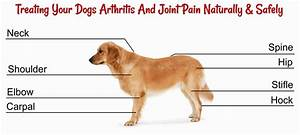 Canine Arthritis And Joint Pain  Healing Naturally