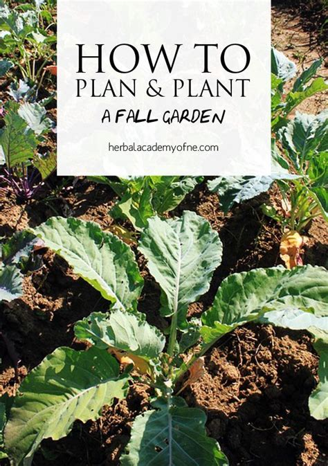 what can you plant in the fall believe it or not even in cold weather climates you can plant a fall garden and watch it grow