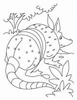Anteater Coloring Popular Library Clipart Clip sketch template